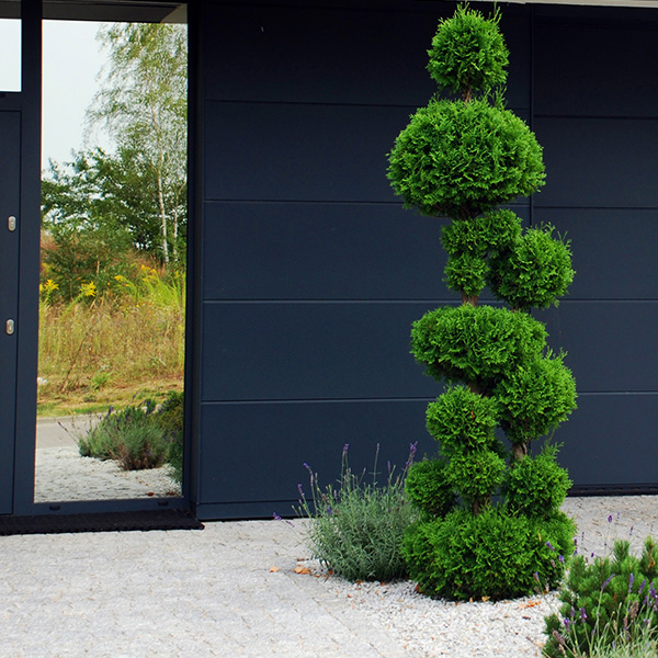 Ogród z motywem bonsai