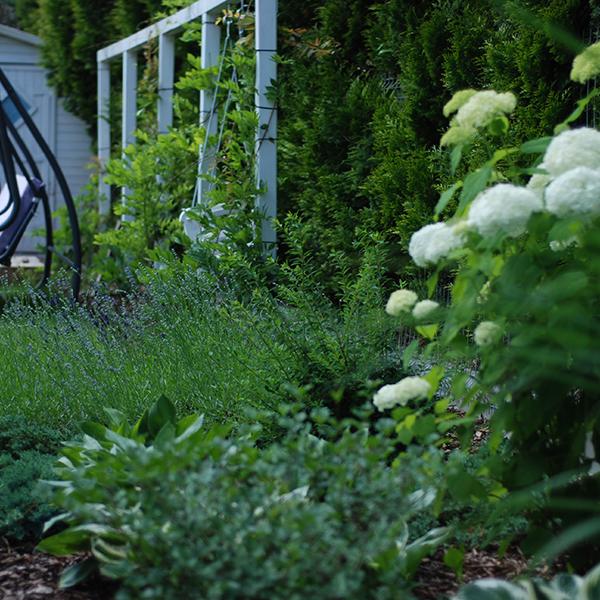 Ogród z bielą