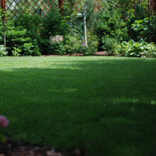 Ogród z dębami w tle
