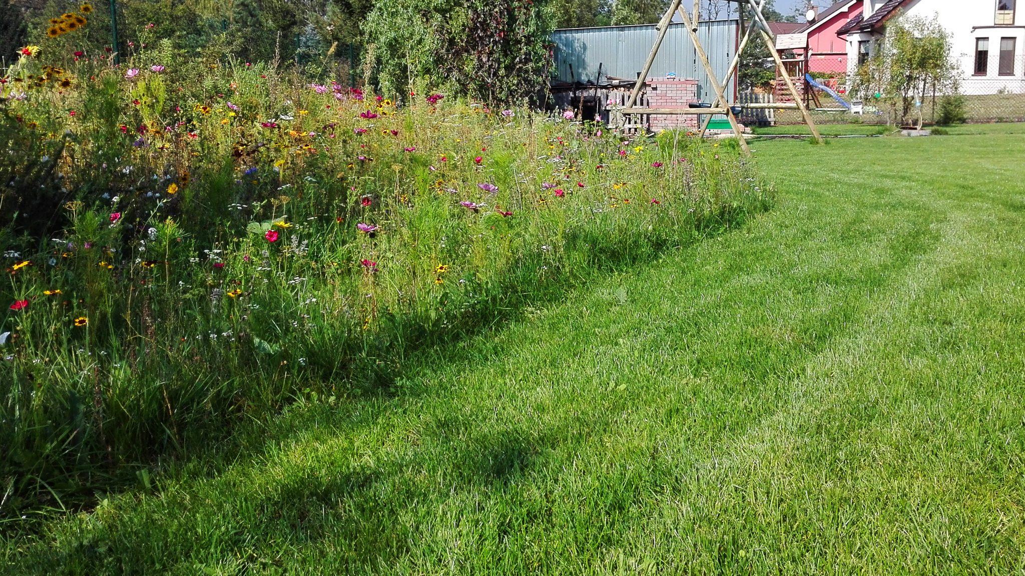 Dobry Ogród Łąka kwietna