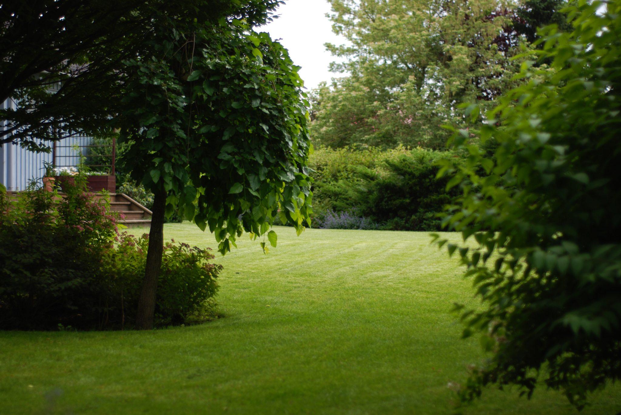 Dobry Ogród Ogród z sosnami w tle