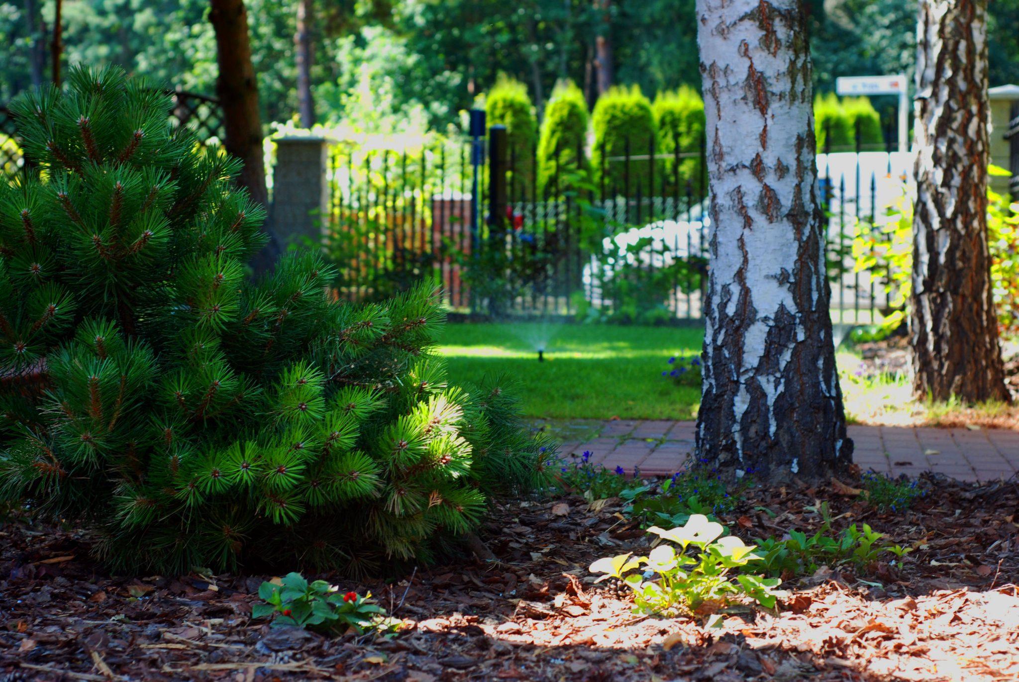 Dobry Ogród Ogród z dębami tle