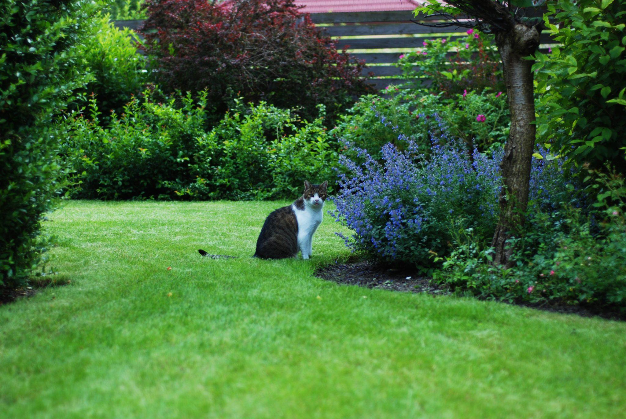 Dobry Ogród kocimiętka i kot