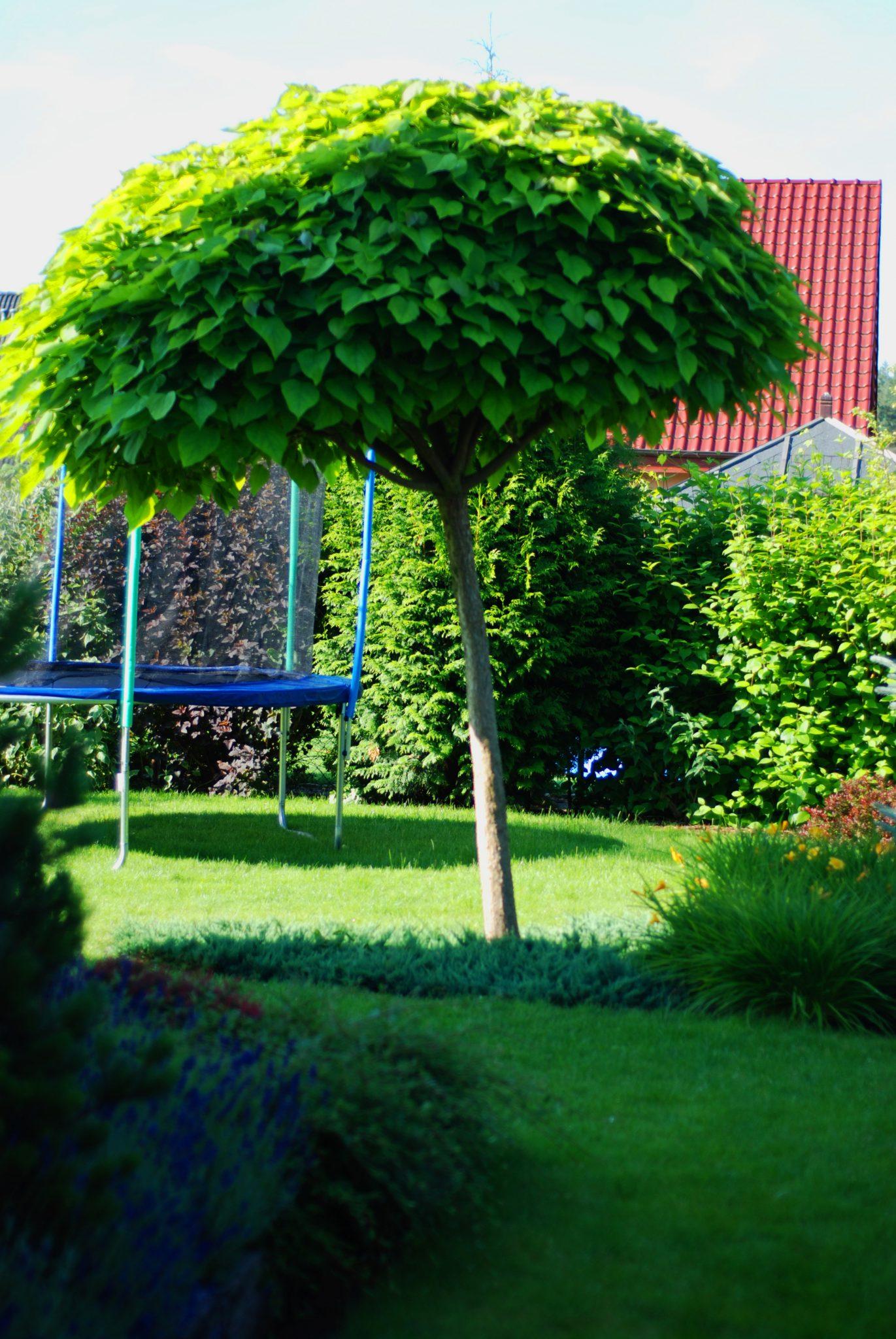 Dobry Ogród