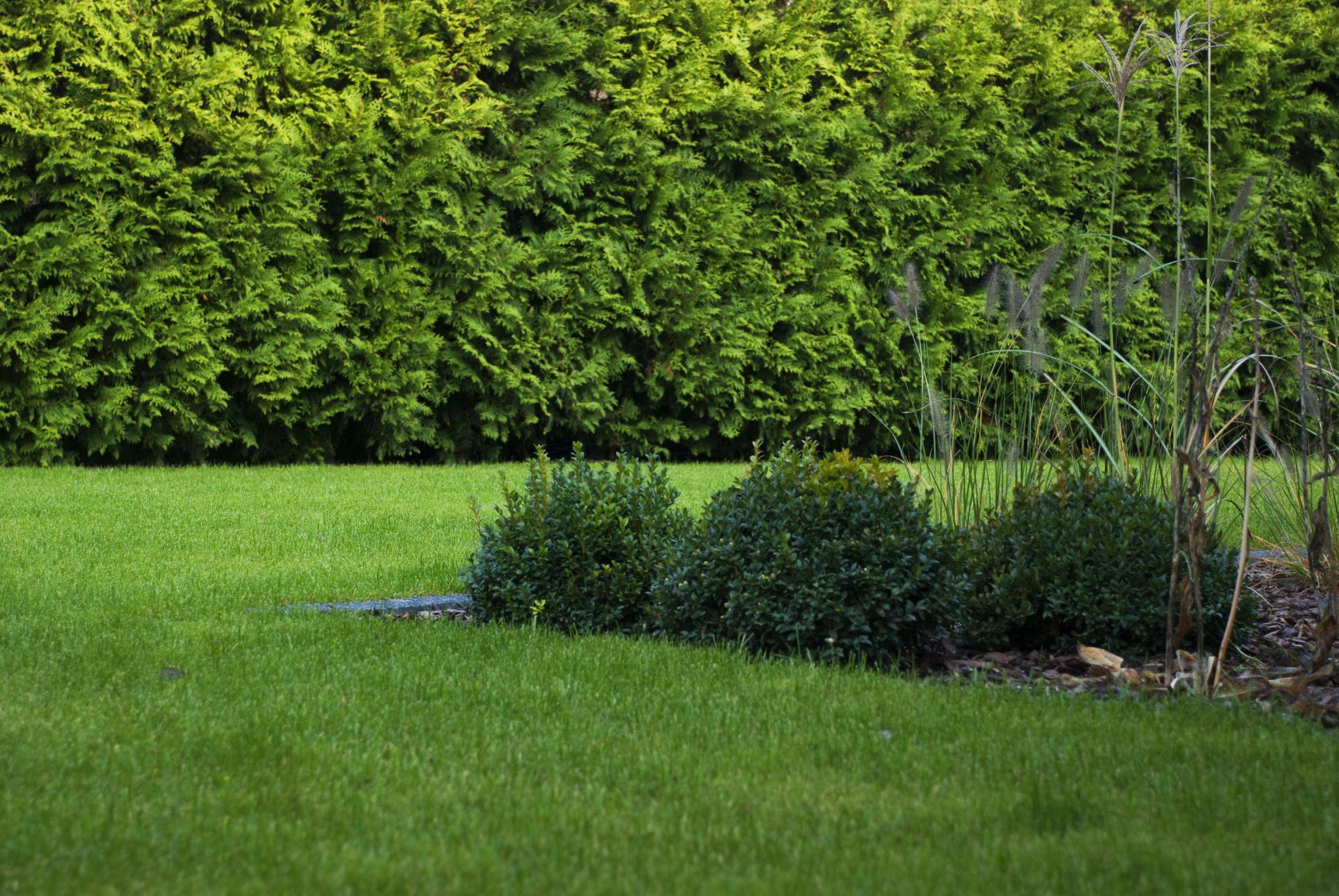Dobry Ogród trawnik