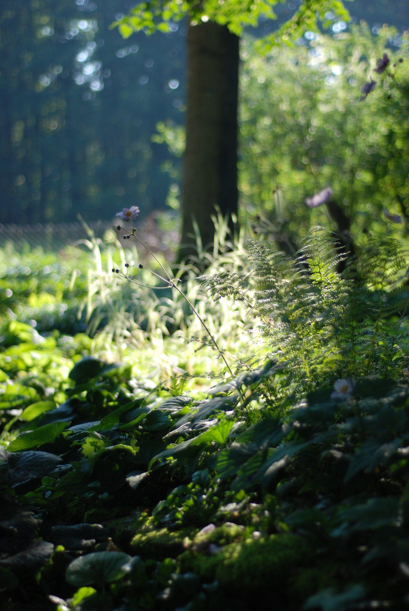 Dobry Ogród Ogród leśny